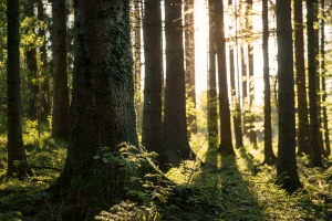 Forests at the Isle Of Bute